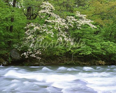 Towadako, Aomori, Japan Stock Photo - Premium Rights-Managed, Artist: Aflo Relax, Code: 859-03806870