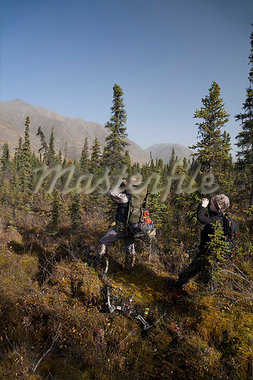 Male bow hunter and young son use binoculars to look for moose amongst Black Spruce, Eklutna Lake area, Chugach State Park, Southcentral Alaska, Autumn Stock Photo - Premium Rights-Managed, Artist: AlaskaStock, Code: 854-03845007