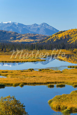 Scenic view of wetlands and yellow colors of Autumn along the Alaska Highway between Haines and Haines Junction, Yukon Territory, Canada Stock Photo - Premium Rights-Managed, Artist: AlaskaStock, Code: 854-03845142