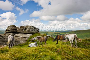 Dartmoor pony herd by Bell Tor, Dartmoor National Park, Devon, England, United Kingdom, Europe Stock Photo - Premium Rights-Managed, Artist: Robert Harding Images, Code: 841-03869870