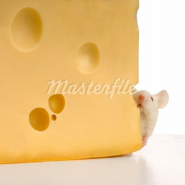 White Mouse in front of a white background Stock Photo - Royalty-Free, Artist: isselee, Code: 400-03918462