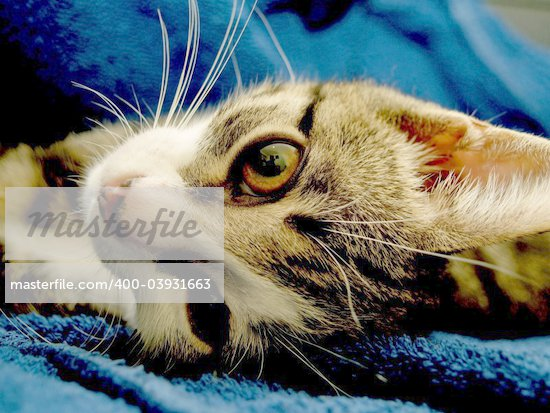 small pussy cat sleeping in the leather chair Stock Photo - Royalty-Free, Artist: igorad, Code: 400-03931663
