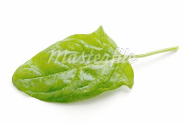 Picture of a spinach leaf on a white background Stock Photo - Royalty-Free, Artist: fotosrt, Code: 400-03931980