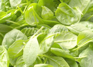 Fresh spinach Stock Photo - Royalty-Free, Artist: victorburnside, Code: 400-03940119