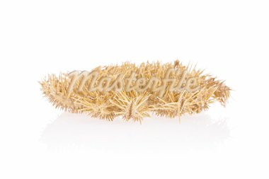 Crown of Thorns Starfish isolated on white background with reflection Stock Photo - Royalty-Free, Artist: kasia75, Code: 400-03950075