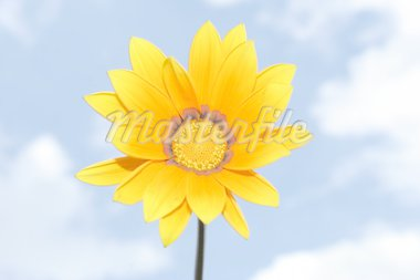 Yellow flower in the sky in summer. Stock Photo - Royalty-Free, Artist: allievn, Code: 400-03964361
