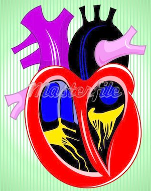 Illustration of heart cross section Stock Photo - Royalty-Free, Artist: tillydesign, Code: 400-04008699