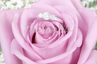 Wedding Ring in Rose, Will you marry me? Stock Photo - Royalty-Free, Artist: melking, Code: 400-04019647