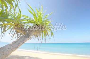 View of nice empty sandy beach with fragment of a  mangrove tree Stock Photo - Royalty-Free, Artist: ersler, Code: 400-04021198