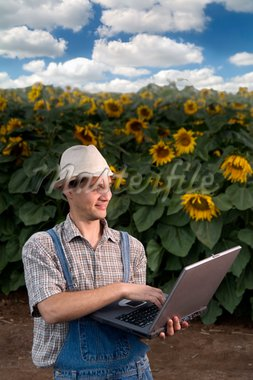 farmer standing in front of a sunflower field with a laptop computer Stock Photo - Royalty-Free, Artist: Noam, Code: 400-04064852