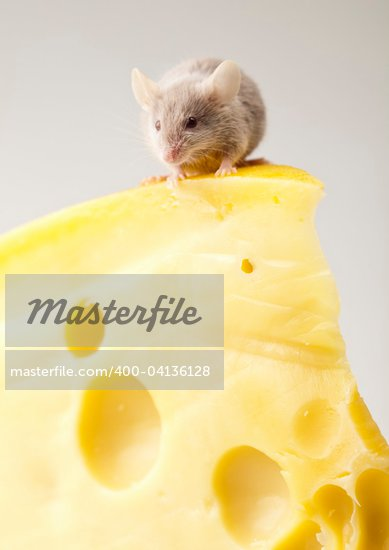 Funny mouse on the cheese Stock Photo - Royalty-Free, Artist: JanPietruszka                 , Code: 400-04136128