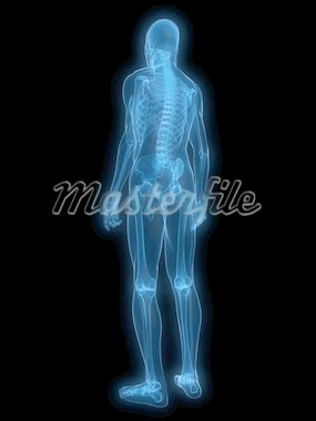 3d rendered x-ray illustration of a human skeleton Stock Photo - Royalty-Free, Artist: Eraxion, Code: 400-04154397