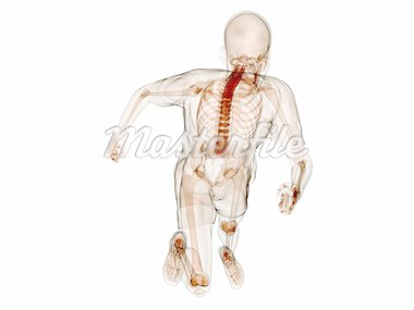 3d rendered illustration of a running human skeleton Stock Photo - Royalty-Free, Artist: Eraxion, Code: 400-04191108