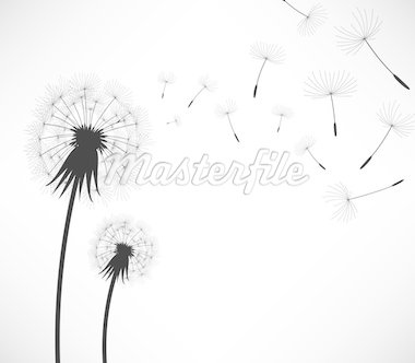 2 dandelion being blown by wind. Stock Photo - Royalty-Free, Artist: leremy, Code: 400-04242103