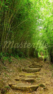 path in bamboo forest Stock Photo - Royalty-Free, Artist: leungchopan                   , Code: 400-04272233