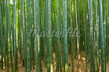 Beautiful bamboo forest in near Arashiyama, Japan Stock Photo - Royalty-Free, Artist: Fyletto                       , Code: 400-04300626