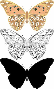 Illustration butterfly in vector. Stock Photo - Royalty-Free, Artist: tshooter                      , Code: 400-04306172