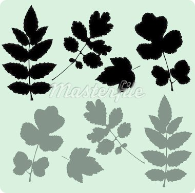 Leaves Stock Photo - Royalty-Free, Artist: albumkoretsky                 , Code: 400-04313341