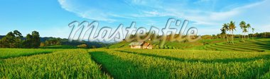 Panorama of the paddy rice field. Philippines Stock Photo - Royalty-Free, Artist: GoodOlga                      , Code: 400-04334269