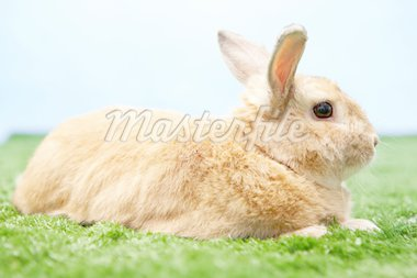 Image of cute rabbit on green grass against blue sky Stock Photo - Royalty-Free, Artist: pressmaster                   , Code: 400-04364824