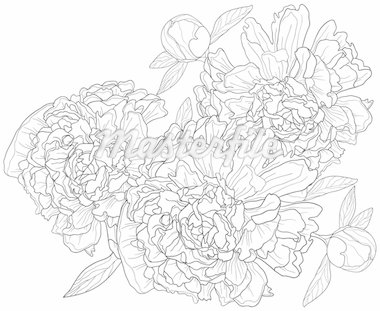 Vector illustration of monochrome background with peonies Stock Photo - Royalty-Free, Artist: pressmaster                   , Code: 400-04367215