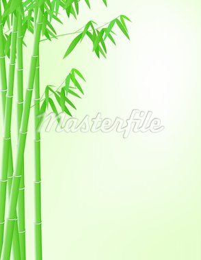 Bamboo tree background Stock Photo - Royalty-Free, Artist: dagadu                        , Code: 400-04367636