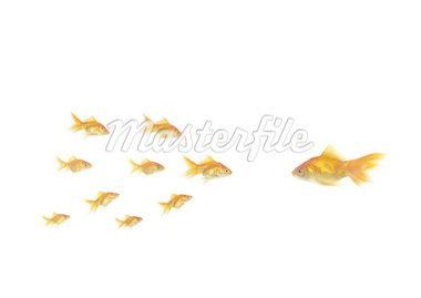flowing goldfish opposite shoal on white background Stock Photo - Royalty-Free, Artist: witoldkr1                     , Code: 400-04380067
