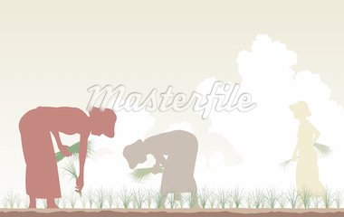 Editable vector silhouettes of women planting rice in a paddy field Stock Photo - Royalty-Free, Artist: tawng                         , Code: 400-04381208