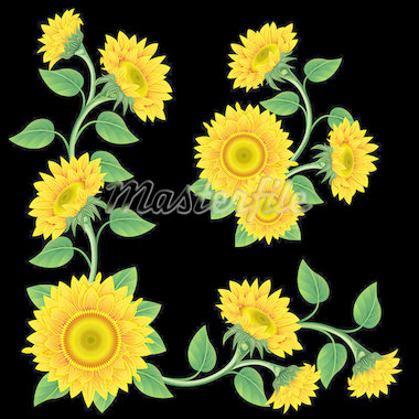 Yellow sunflowers on the  black background. Design element. Stock Photo - Royalty-Free, Artist: Lep                           , Code: 400-04398145