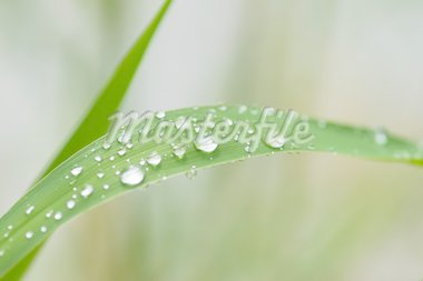 rain drops on grass leaf Stock Photo - Royalty-Free, Artist: psamtik                       , Code: 400-04585509