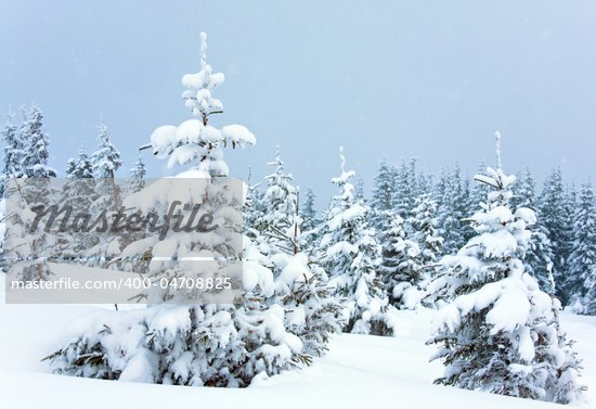 winter calm mountain landscape with snowfall ang beautiful fir trees  on slope (Kukol Mount, Carpathian Mountains, Ukraine) Stock Photo - Royalty-Free, Artist: Yuriy                         , Code: 400-04708825