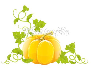 ripe orange pumpkin vegetable with green leaves vector illustration, isolated on white background Stock Photo - Royalty-Free, Artist: LoopAll                       , Code: 400-04714358