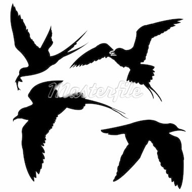silhouette of the sea birds on white background Stock Photo - Royalty-Free, Artist: basel101658                   , Code: 400-04732881