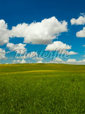 Beautiful green meadow with a great cloudy sky Stock Photo - Royalty-Free, Artist: iko                           , Code: 400-04754544