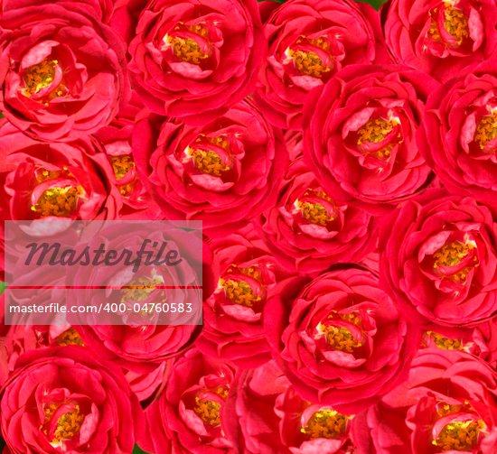 Romanticism rose sherjaca Artist Valentine 39s day wallpaper wedding