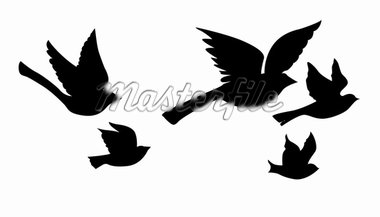 vector silhouette flying birds on white background Stock Photo - Royalty-Free, Artist: basel101658                   , Code: 400-04860183