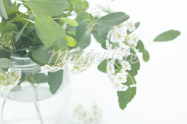 A bouquet of white flowers in a glass vase Stock Photo - Royalty-Free, Artist: Myrka                         , Code: 400-04872559