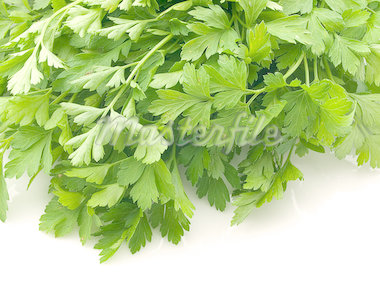 Flat leaved parsley on white Stock Photo - Royalty-Free, Artist: victorburnside                , Code: 400-04888316