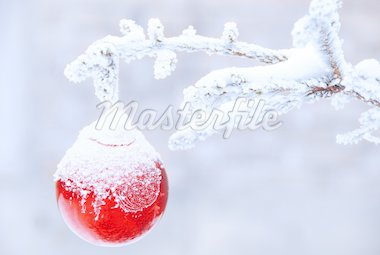 christmas golden ball on snowy new year tree outdoor Stock Photo - Royalty-Free, Artist: simply                        , Code: 400-04902751