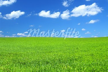 beautiful vivid green summer field with a few cumulus clouds   Stock Photo - Royalty-Free, Artist: kmit                          , Code: 400-05067399