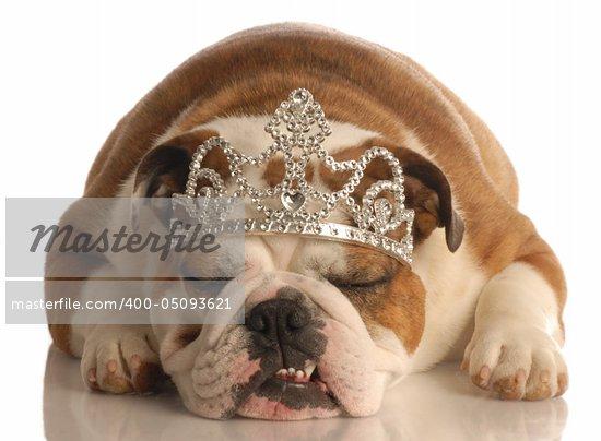 english bulldog wearing princess crown or tiara isolated on white background Stock Photo - Royalty-Free, Artist: willeecole                    , Code: 400-05093621