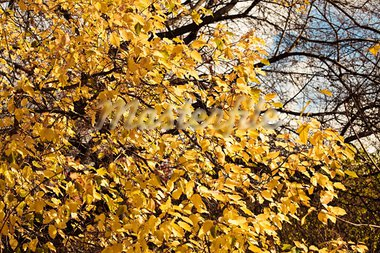 Autumn colorful leaves, natural backdrop for any purpose Stock Photo - Royalty-Free, Artist: Supertrooper                  , Code: 400-05266494