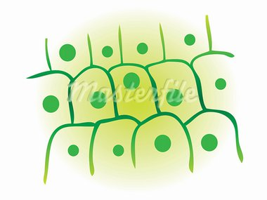 photosynthesis leaf plant cell vector illustration Stock Photo - Royalty-Free, Artist: icons                         , Code: 400-05311324