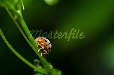 orange beetle in green nature or the garden Stock Photo - Royalty-Free, Artist: SweetCrisis                   , Code: 400-05358557