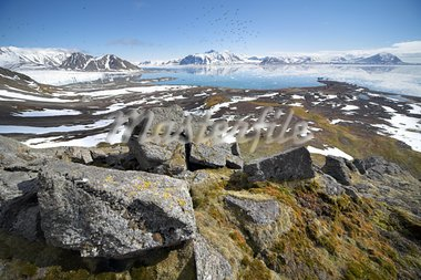 Arctic summer landscape - tundra, sea and mountains Stock Photo - Royalty-Free, Artist: erectus                       , Code: 400-05361358