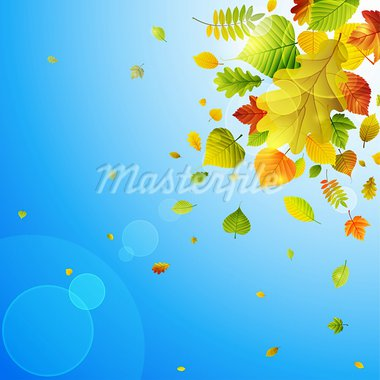 Autumn background with colorful leaves on sky and place for text. Vector illustration. Stock Photo - Royalty-Free, Artist: avian                         , Code: 400-05363902