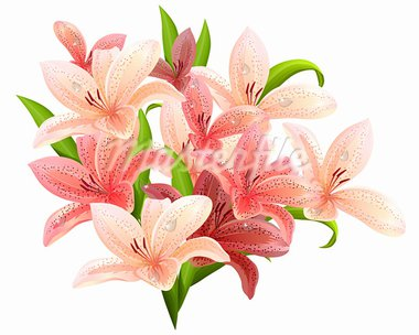 Big bunch of lilies isolated on white background Stock Photo - Royalty-Free, Artist: nurrka                        , Code: 400-05366004