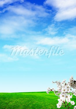 Nice spring day for you Stock Photo - Royalty-Free, Artist: ztk                           , Code: 400-05370967