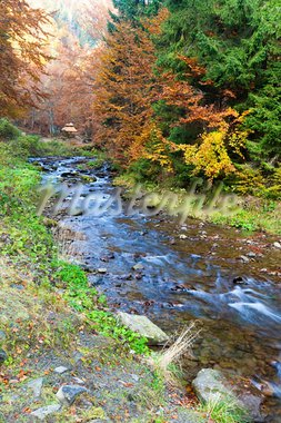 Rocky Stream, Running Through Autumn Mountain Forest Stock Photo - Royalty-Free, Artist: Yuriy                         , Code: 400-05371760