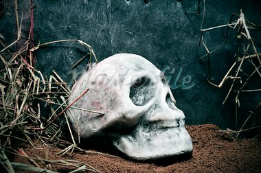 a skull out of a grave on a scary scene for Halloween Stock Photo - Royalty-Free, Artist: nito                          , Code: 400-05373315